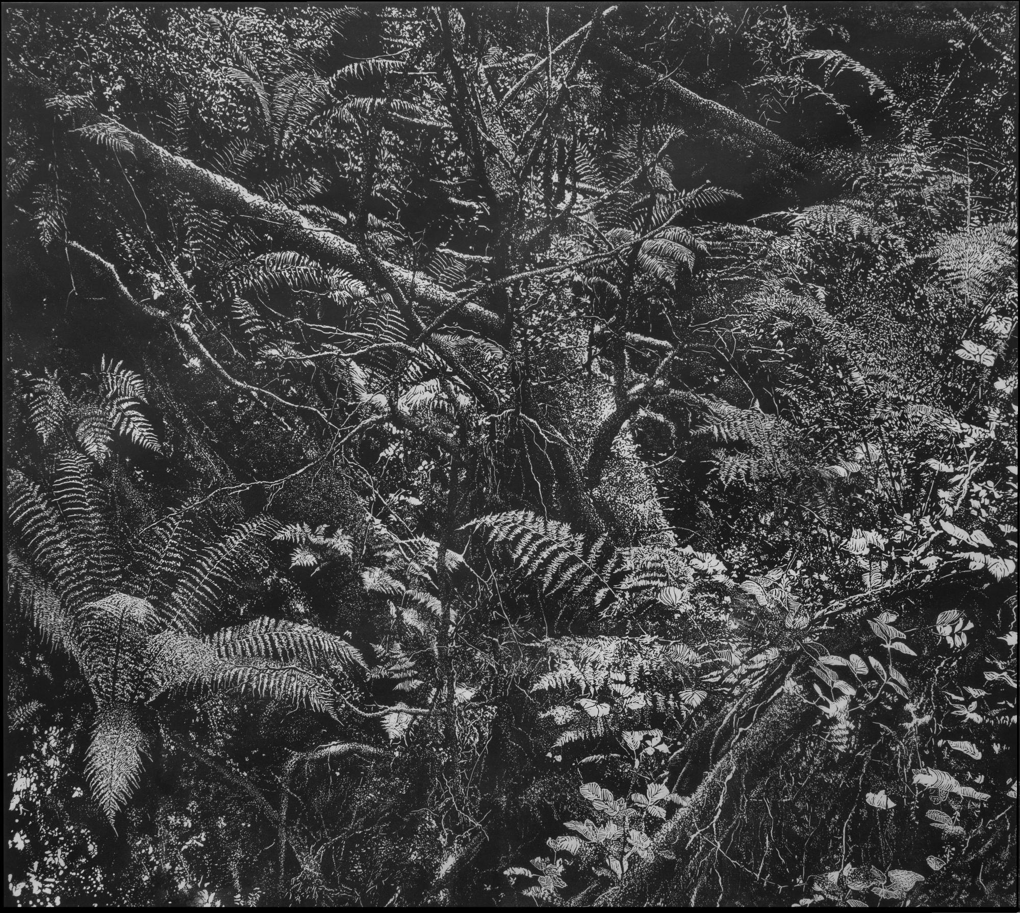 Georges Wenger, Lydford Gorge Forest I, 2016, Copyright: Georges Wenger