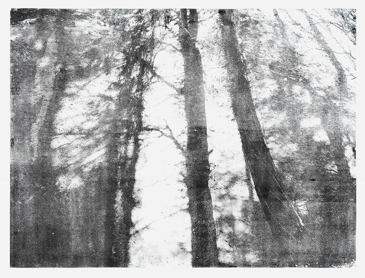Cécile Wick, Wald III, 2017, Lithographie, 152 x 250 cm. © Cécile Wick
