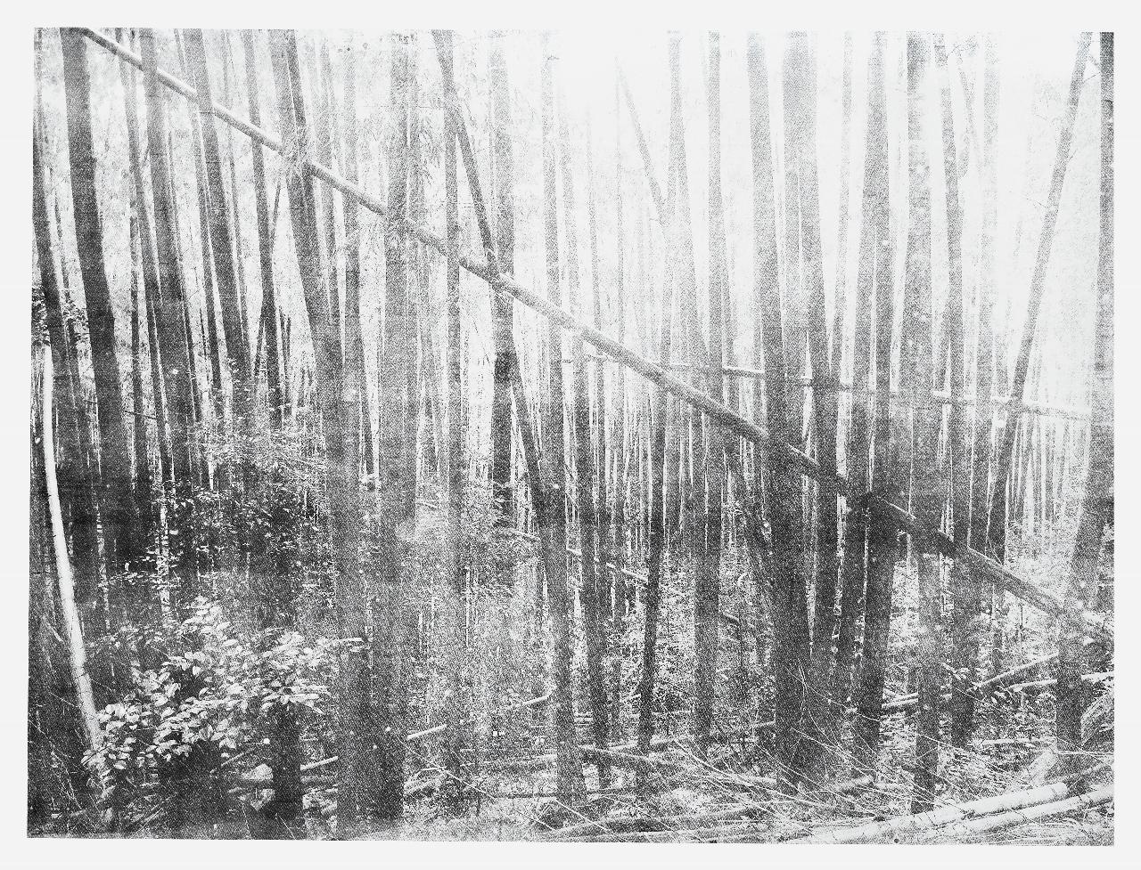 Cécile Wick, Wald I, 2017, Lithographie, 152 x 250 cm. © Cécile Wick
