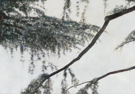 Angela Lyn, «cedaring IV», 2014, Öl auf Leinwand, 125 x 180 cm © Angela Lyn, Foto: Markus Mühlheim, Courtesy: extra Landschaftsarchitekten AG, Bern